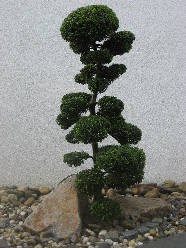 Bonsai_Schlepper